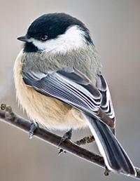 conservation_bird