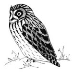 The Prairie Owl