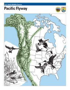Pacific Flyway Map