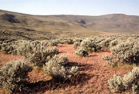 shrub_steppe